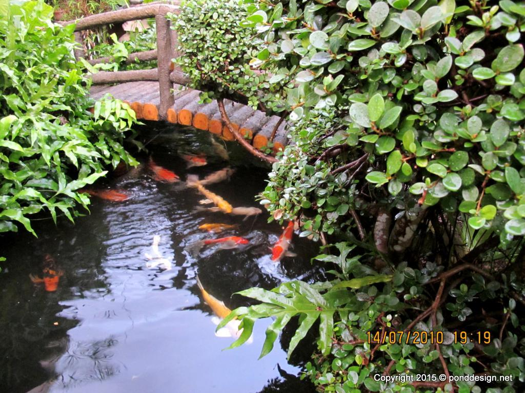 Fish Pond Ideas Comely Fish Pond On Pinterest Fish Ponds Ponds And ...